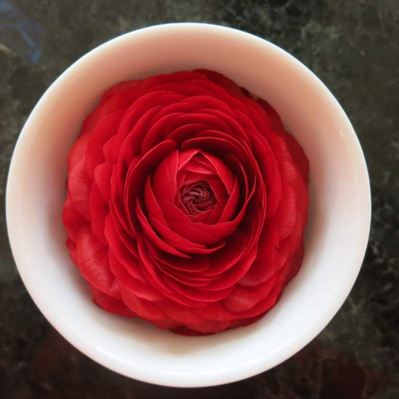 flower red_wo